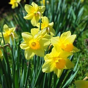 春、到来! たいめいる2011年3月号