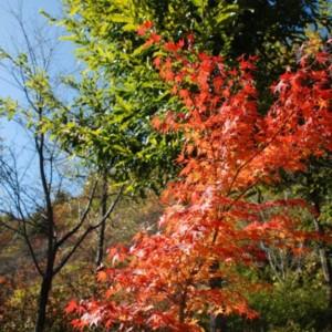 奥多摩湖の紅葉 たいめいる2011年11月号