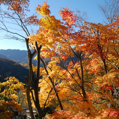 高山市奥飛騨の紅葉 たいめいる2012年11月号